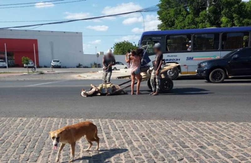 Vencido pelo cansaço, jumento desaba em plena Avenida da Integração, em Petrolina, PE