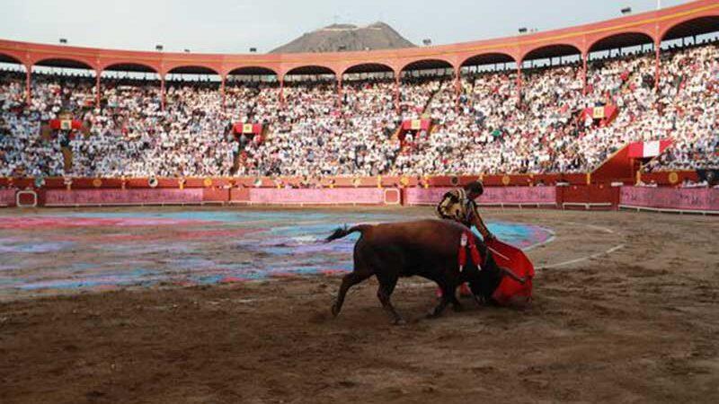 Antes da pandemia, havia cerca de 540 touradas por ano no Peru. Lino Chipana/Arquivo