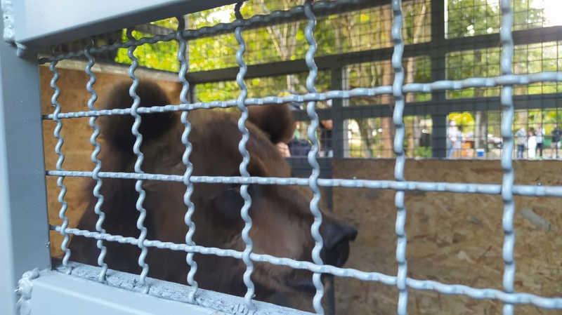 Ursa do Zoológico de Dois Irmãos, no Recife, é escoltada pela PRF até São Paulo