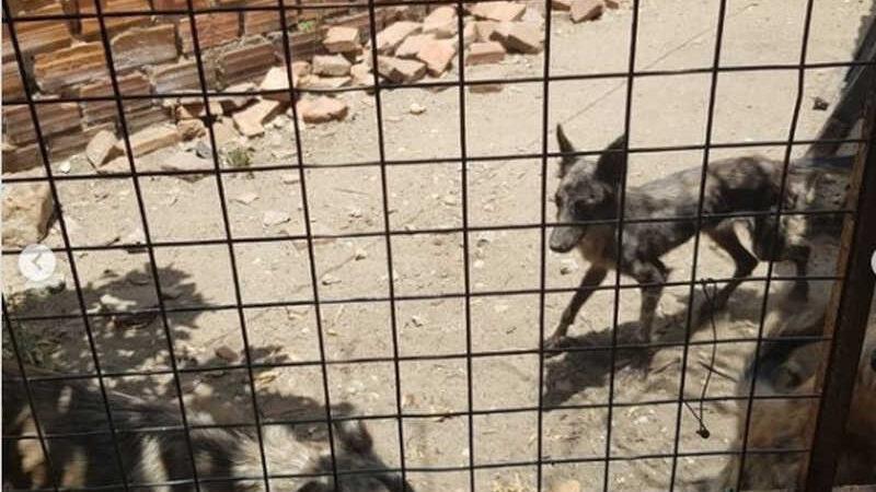 Polícia resgata cachorros vítimas de maus-tratos em Teresina — Foto: Divulgação/Polícia Civil