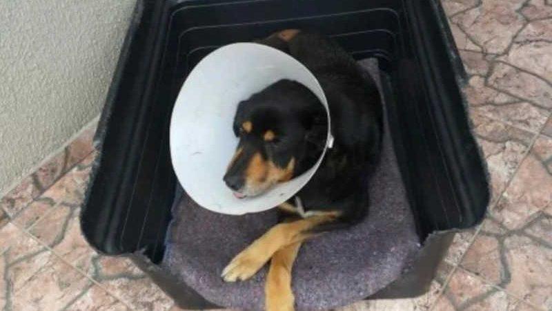Cãezinhos são bem cuidados por pessoas como a Paloma, que amam a causa animal. Foto: divulgação