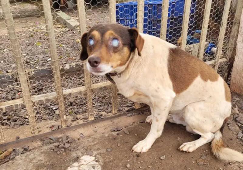 Cachorrinho cego e com coleira é encontrado abandonado em Cascavel, PR