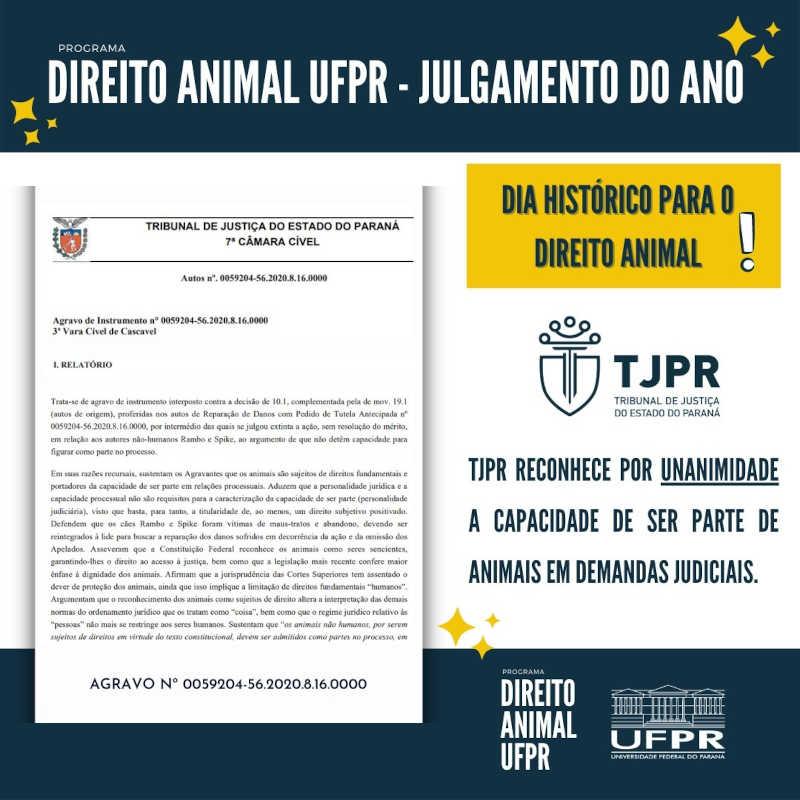 Em decisão histórica, Tribunal de Justiça do PR determina que animais podem ser parte em ação judicial