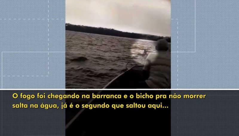 Vídeo mostra animais pulando na água do Rio Paraná para tentar escapar de incêndio — Foto: Reprodução/RPC
