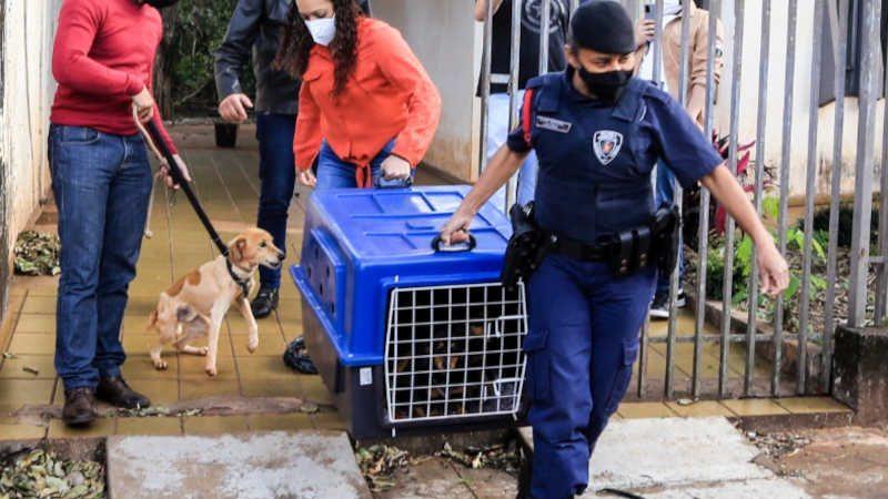 Os animais foram encaminhados para avaliação veterinária/ Foto - Aldemir de Moraes/PMM