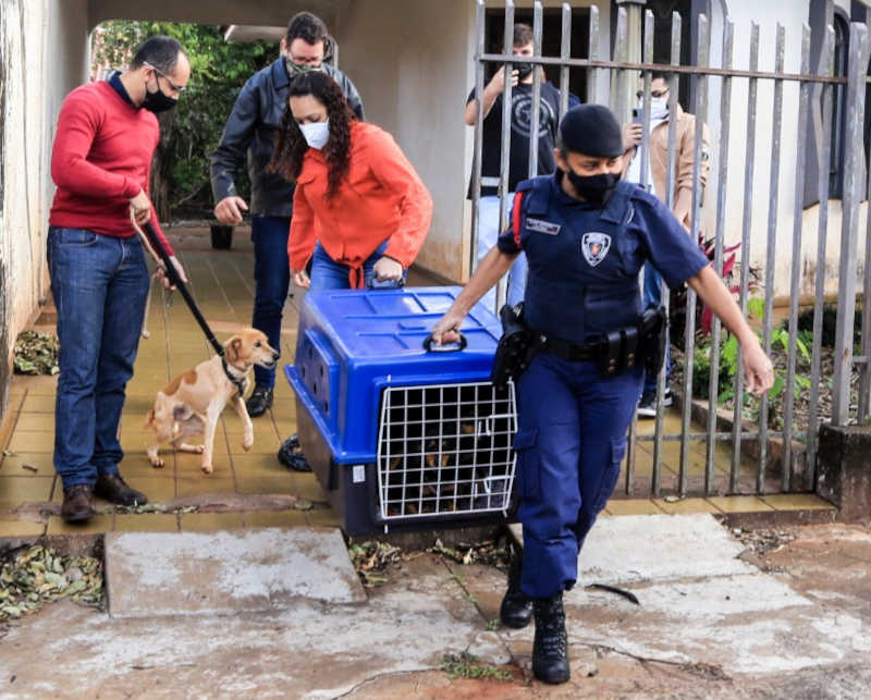 Prefeitura resgata cinco cães após denúncias de maus-tratos em Maringá, PR