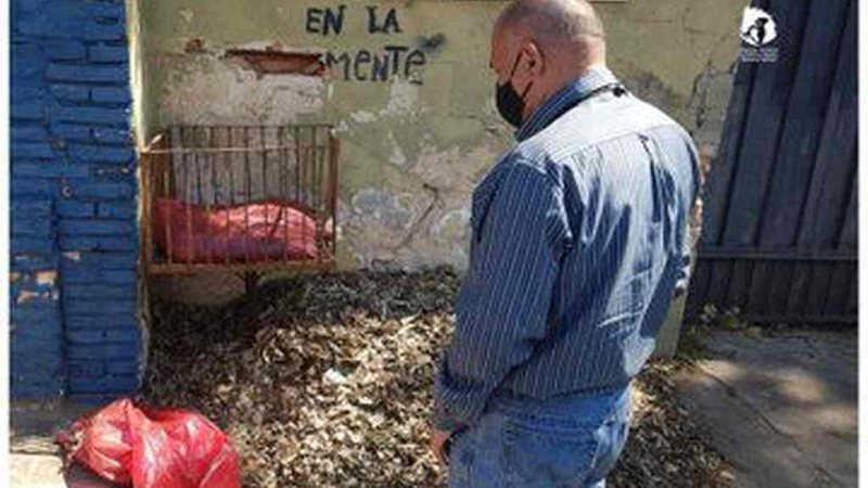 Vigilância investiga descoberta de caudas de animais mutiladas em Assunção, no Paraguai
