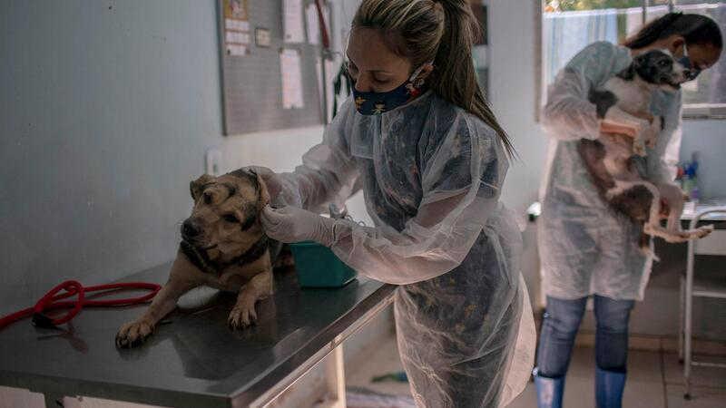 Portugal: Cascais expande medidas sociais e tem teleconsultas veterinárias gratuitas