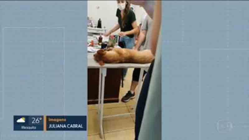 Cães mortos em Magé (RJ) receberam insulina em vez de vacina da raiva, diz prefeitura