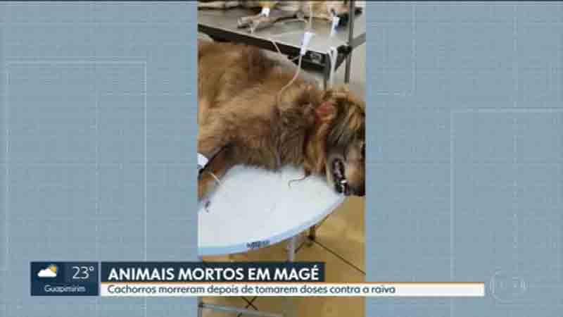Rio adia campanha contra raiva depois que 10 animais morreram na vacinação em Magé, na Baixada Fluminense