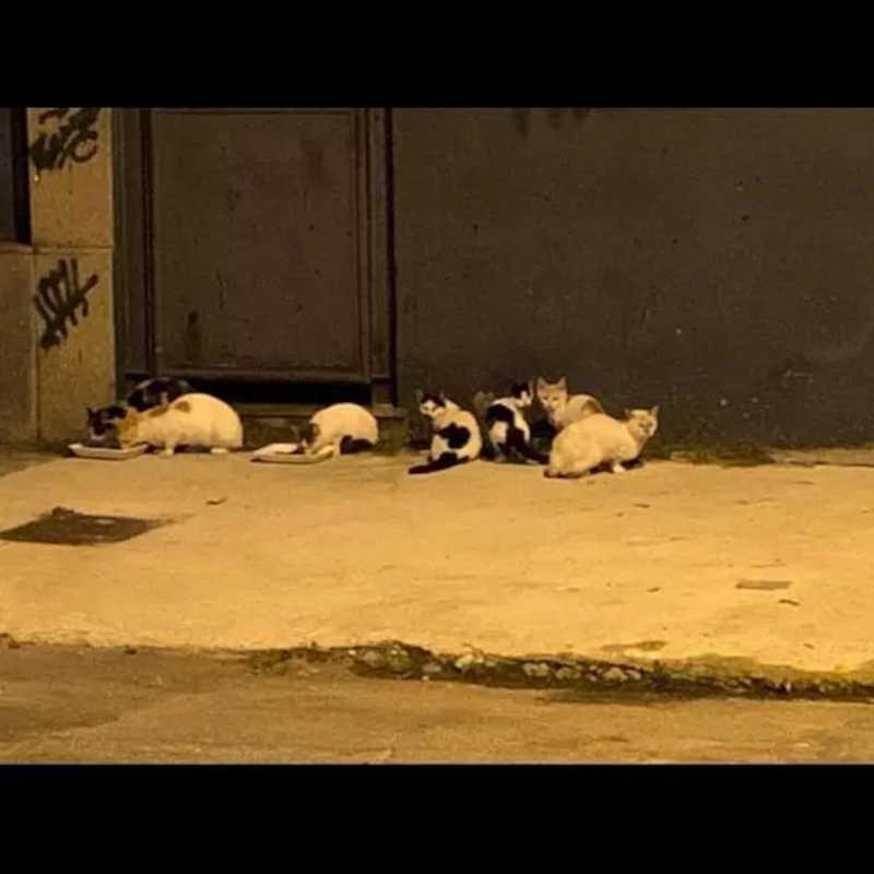 Protetora é proibida de alimentar e castrar gatos comunitários em fábrica na zona norte do Rio