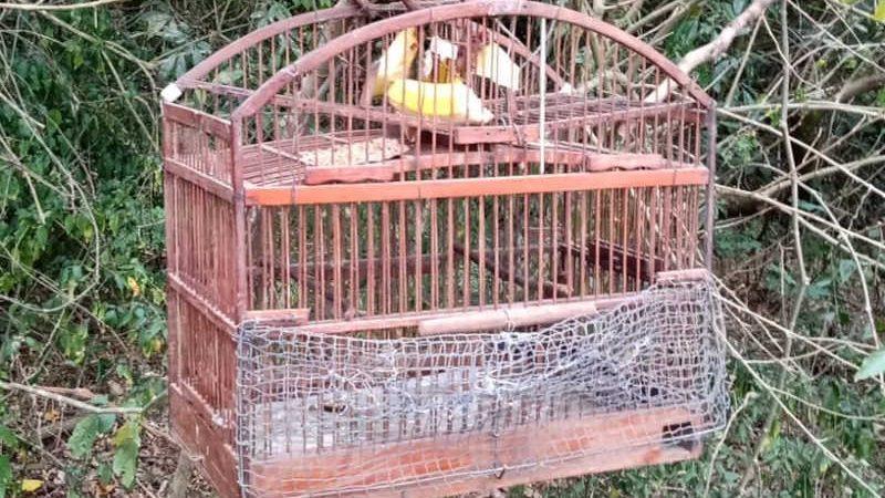 Pássaros apreendidos em Volta Redonda — Foto: Prefeitura de Volta Redonda