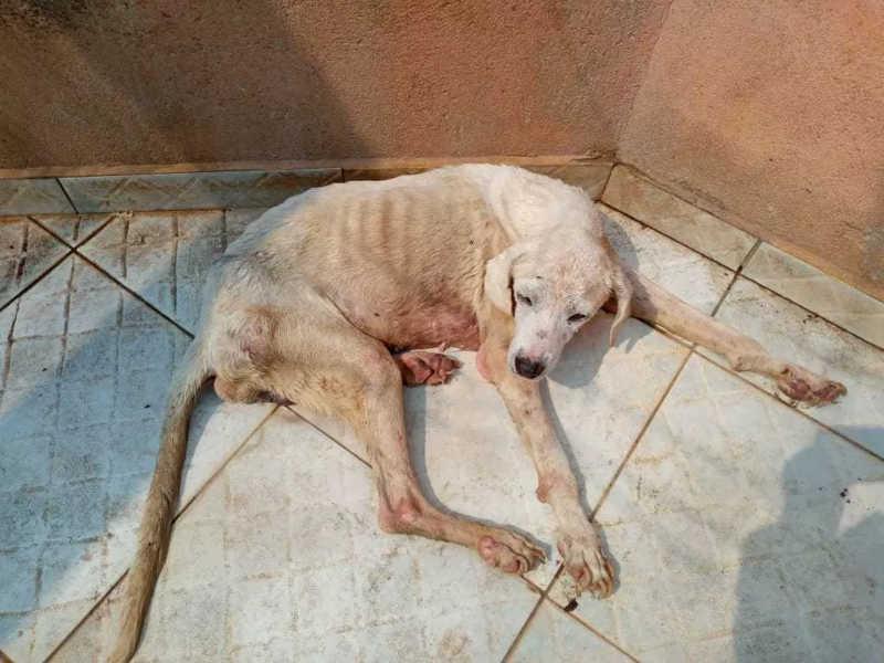 Cuidadora resgatou mais de 10 mil animais abandonados durante trabalhos em Rondônia