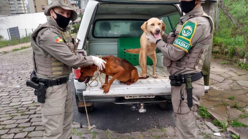 Pelotão Ambiental resgata animais em situação de maus-tratos em Bento