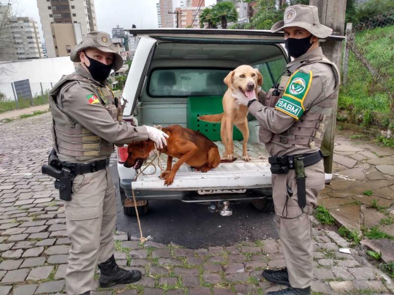 Pelotão Ambiental resgata animais em situação de maus-tratos em Bento Gonçalves, RS