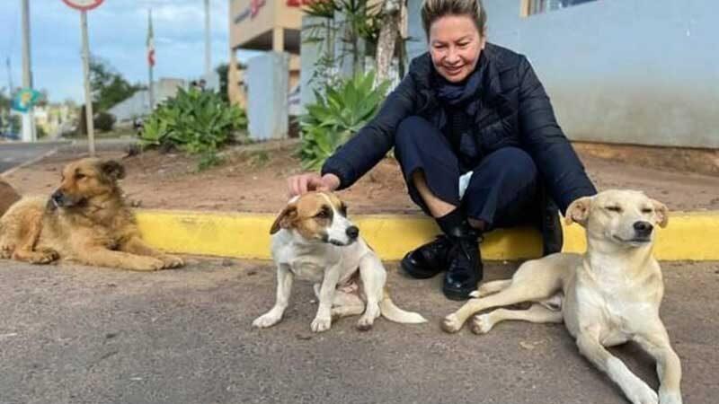 Secretária estadual Regina Becker Fortunati pediu explicações ao prefeito sobre o sumiço dos três cachorros - Reprodução/FN