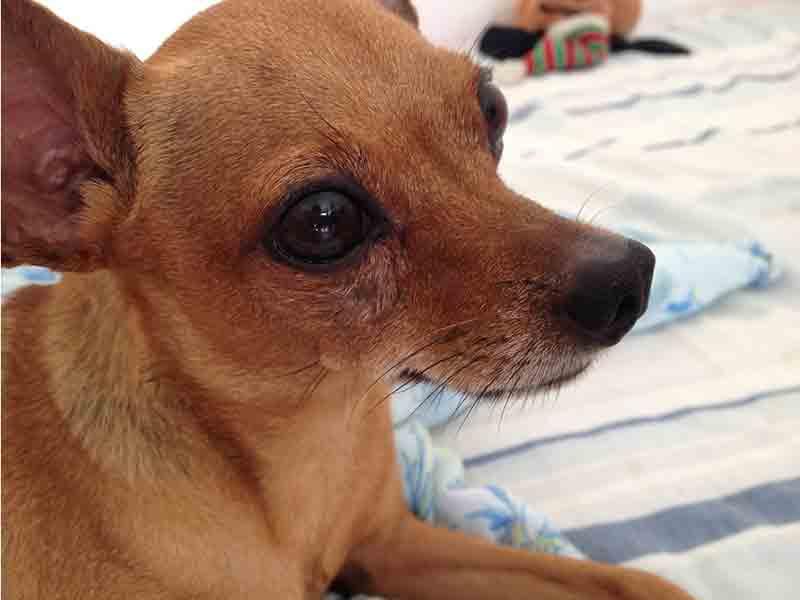 Empresário é acusado de matar cachorro a chutes em Horizontina, RS