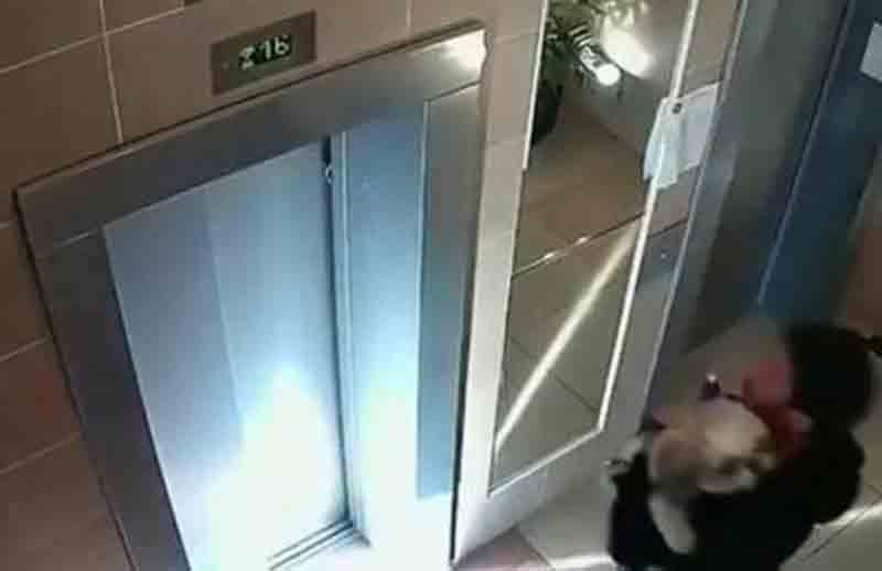 Homem salva cão preso em porta de elevador Foto: Reprodução/YouTube