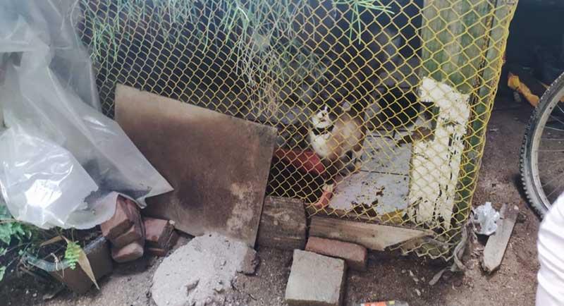 Gatos vítimas de maus-tratos são resgatados em Brusque, SC