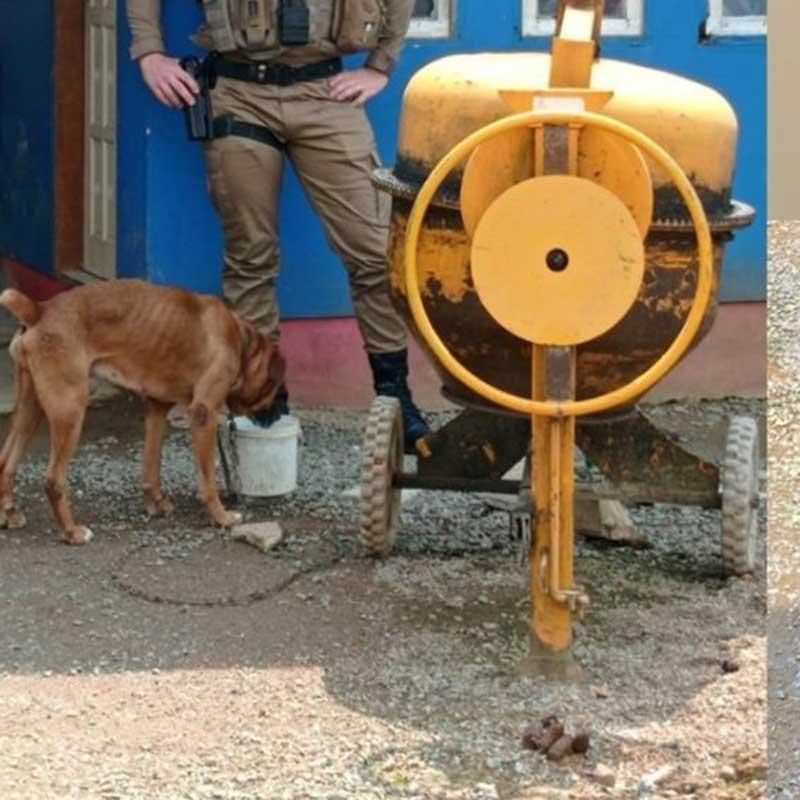 Cães são resgatados após ficar sem água e comida por mais de três dias em Jaraguá do Sul, SC
