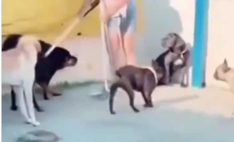 VÍDEO: ONG denuncia agressão a cachorro em creche de Joinville, SC