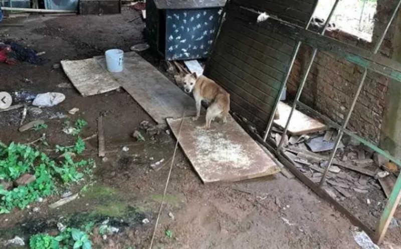 Cachorro em situação de maus-tratos é resgatado em Maravilha, SC