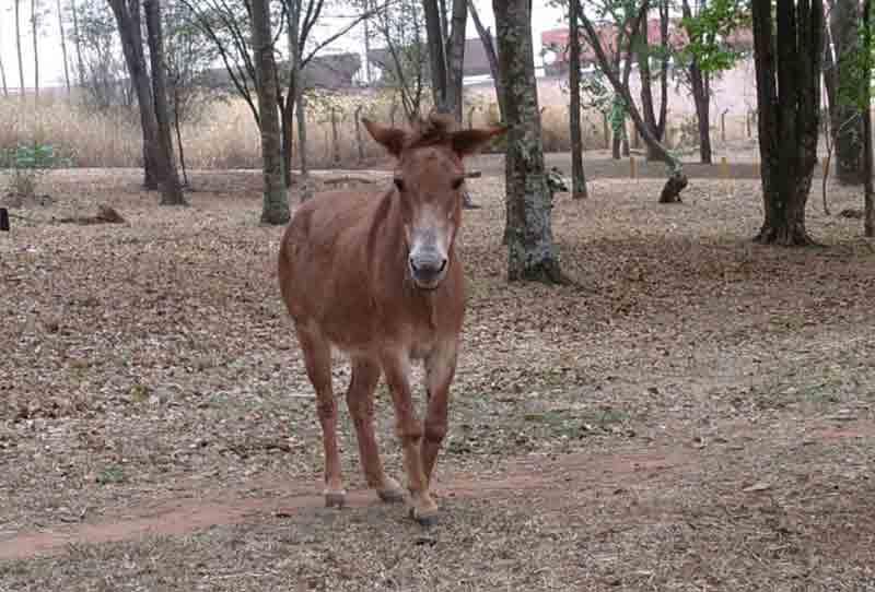 Araraquara (SP) cadastra voluntários em adotar ou dar abrigo transitório a animais de grande porte