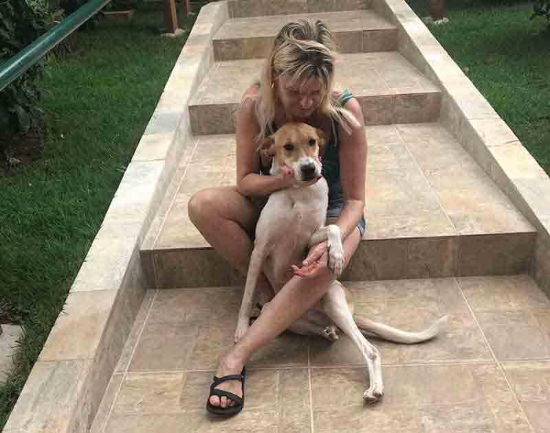 Barueri (SP) auxilia na adoção de cães e gatos com necessidades especiais, idosos e de grande porte