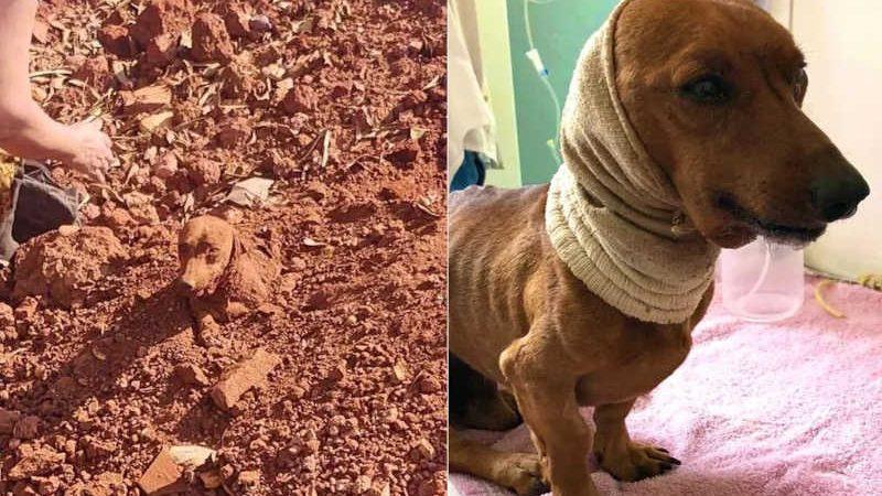 Casal encontra cachorro enterrado vivo às margens de rodovia em Tatuí — Foto: União Protetora dos Animais (UIPA)/Divulgação