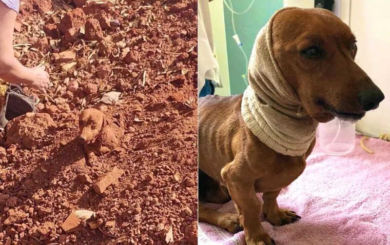 Suspeito de enterrar cachorro vivo se apresenta à polícia e é liberado após prestar depoimento