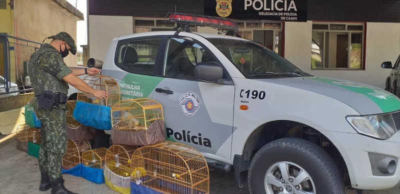 Doze pássaros silvestres mantidos em cativeiro são localizados em residência em Cajati, SP