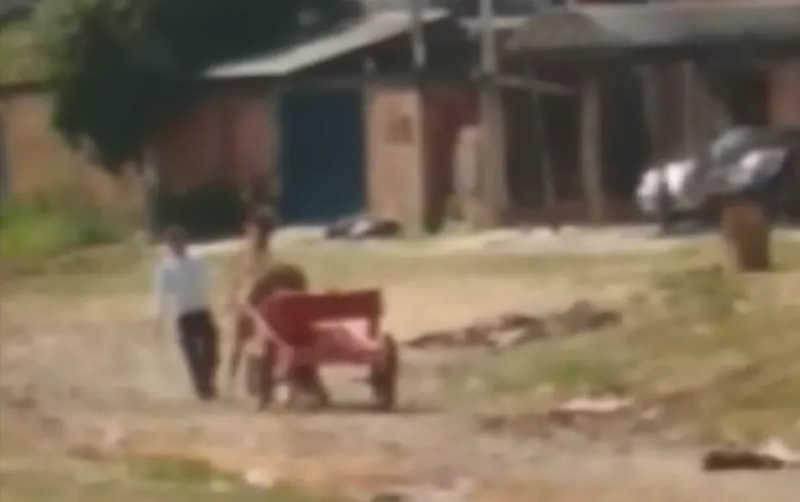 Vídeo mostra momento em que homem agride cavalo em terreno de Campinas, SP; veja imagens