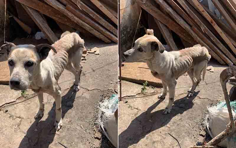 Cachorrinha foi levada para ONG após flagrante em Capão Bonito — Foto: Polícia Civil/Divulgação