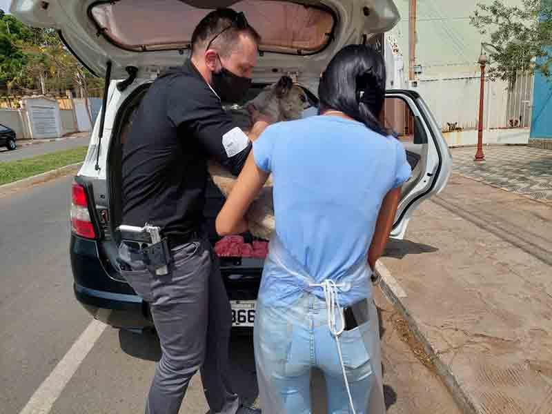 Policiais entregaram cadela para ONG em Capão Bonito — Foto: Polícia Civil/Divulgação