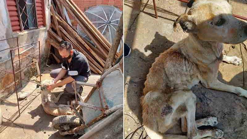 Cachorra com sinais de maus-tratos foi encontrada em Capão Bonito — Foto: Polícia Civil/Divulgação