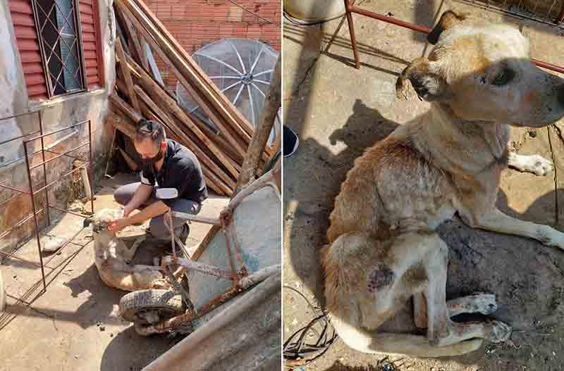 Polícia prende investigado por receptação ao flagrar cadela com sinais de maus-tratos na casa dele