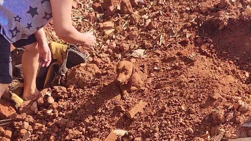 Cachorro é encontrado enterrado vivo às margens de rodovia — Foto: União Protetora dos Animais (UIPA)/ Divulgação