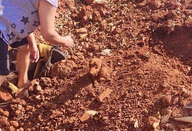 Casal encontra cachorro enterrado vivo às margens de rodovia no interior de SP