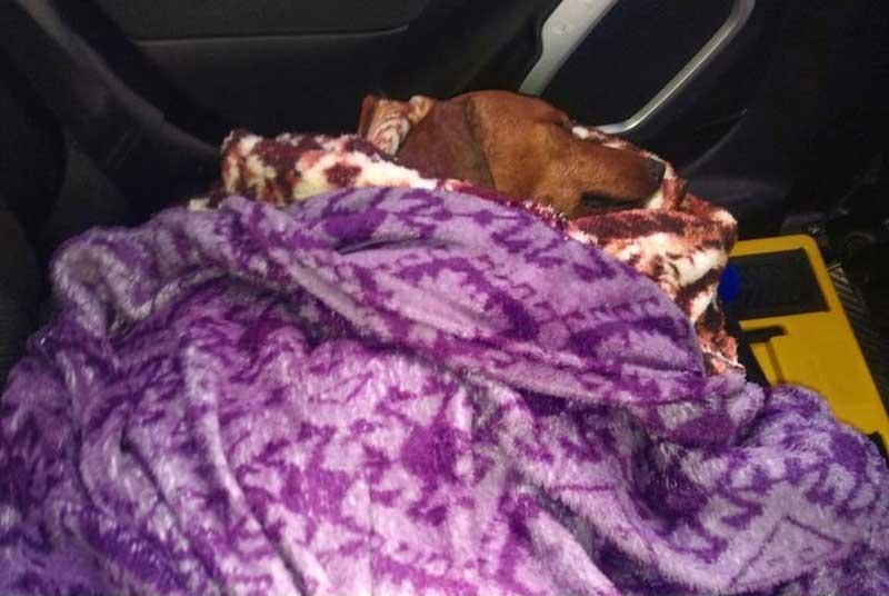 Cachorro foi encontrado enterrado às margens de rodovia — Foto: União Protetora dos Animais de Itapetininga/ Divulgação