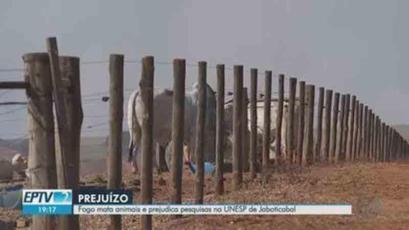 Incêndio atinge área da Unesp e causa morte de três bois em Jaboticabal, SP