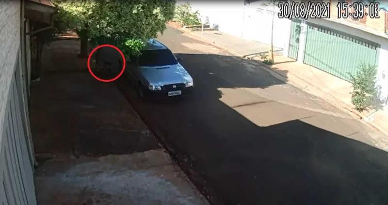 Câmera de segurança registra cachorro sendo abandonado por motorista em rua de Jaú, SP