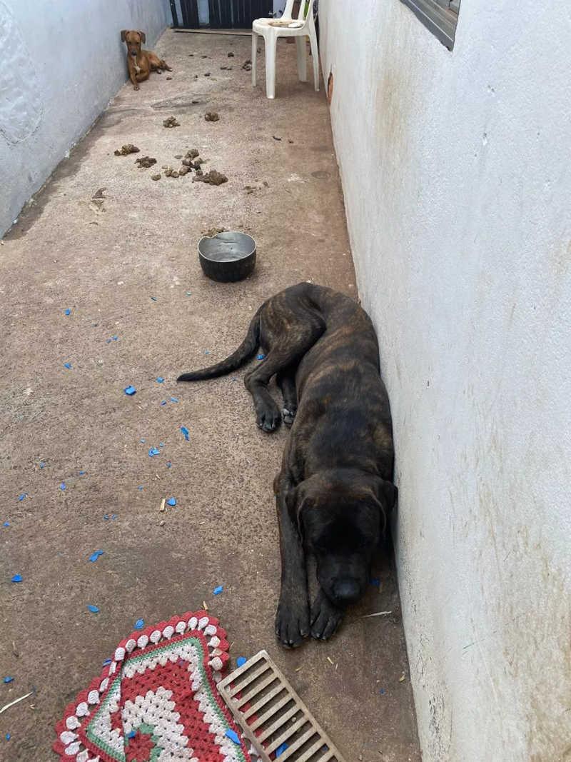 Mulher é presa por tráfico de drogas e maus tratos a animais em Jaú (SP) — Foto: Polícia Civil/ Divulgação