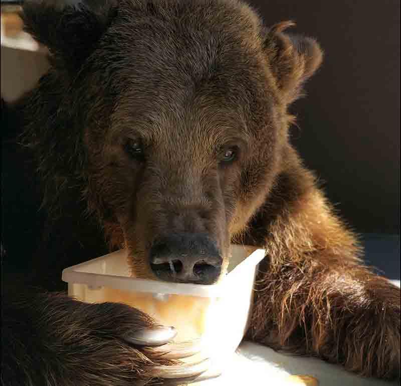 Ursa Mizar trata artrose em santuário de animais no interior de SP — Foto: Biga Pessoa/ Rancho dos Gnomos