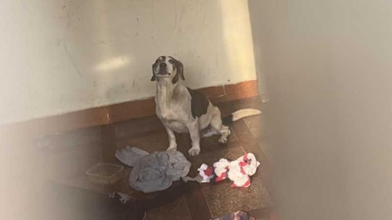 Família se muda e abandona cão trancado e com fome em casa no bairro Boa Vista, em Limeira, SP