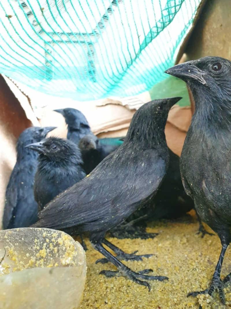 Pássaros apreendidos. Foto por: PRF