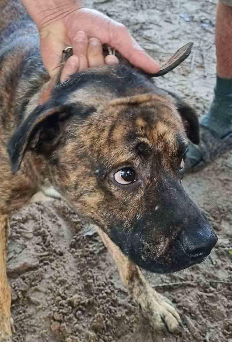 Animais estavam machucados e sem comida — Foto: Divulgação/Polícia Civil