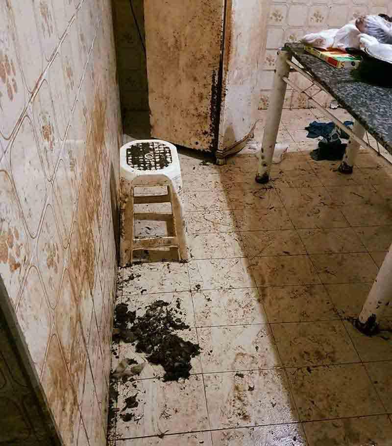 Animais estavam em casa cheia de fezes e urina — Foto: Divulgação/Polícia Civil