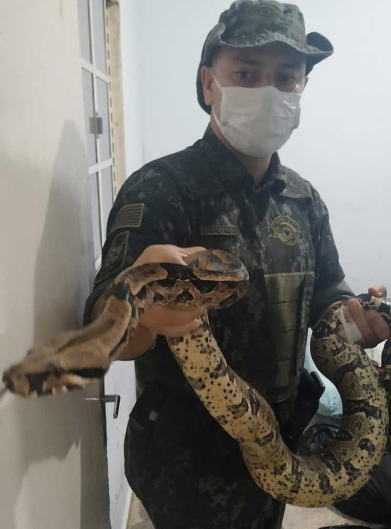 Cobras foram localizadas por policiais militares ambientais — Foto: Divulgação/PM Ambiental
