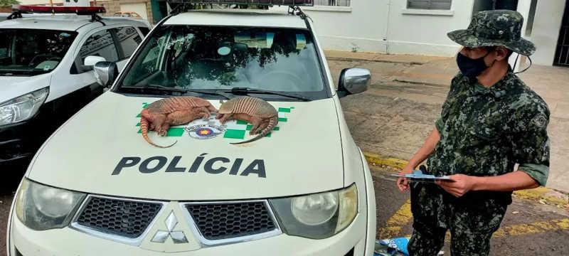 Tatus-peba mortos foram encontrados em fazenda e homens autuados — Foto: Polícia Ambiental