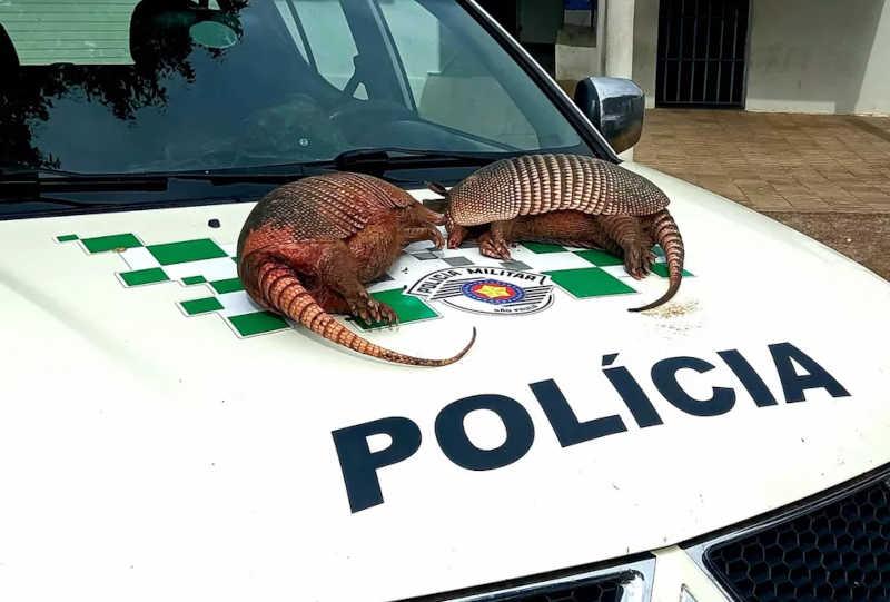 Após polícia encontrar tatus-peba mortos, homens são multados em R$ 2 mil por caça de animais silvestres em SP
